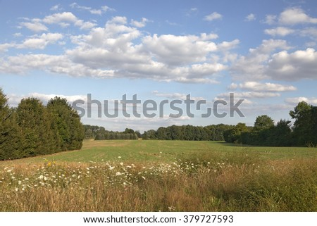 Field shoulder with wild flowers in the Osnabrueck country, Lower Saxony, Germany