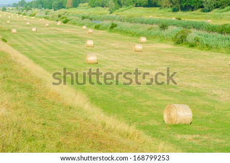 Field with rolls of hay on summer day