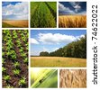 fields collage - stock photo