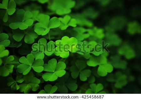find four leaf red clover Photo credit main image: wallpaper-kidcom in honour of stpatrick's day here are 10 fun facts about four-leaf clovers photo credit: getty images.