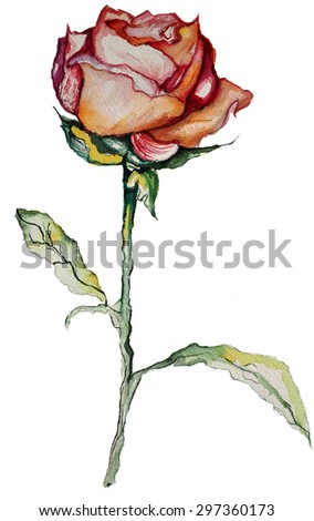 Finely detailed rose done in acrylic watercolor