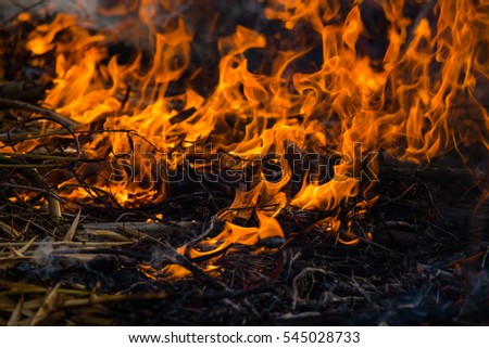 fire, burning grass and small trees.