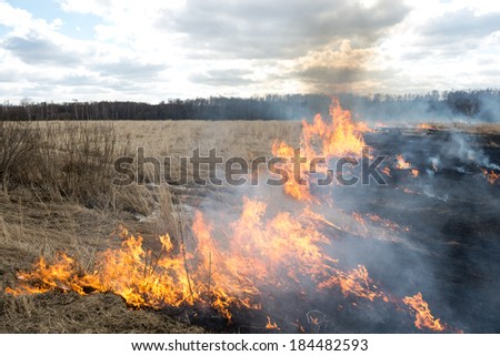 Fire. midland Europe. old grass burning in a field near the forest