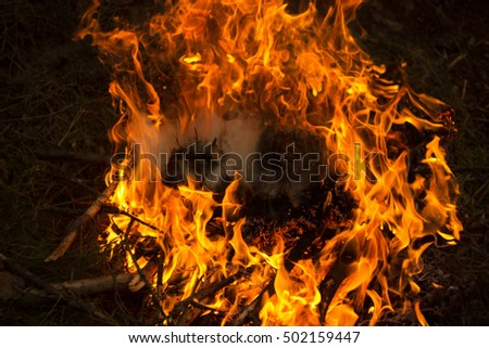 Fire with leaves burning