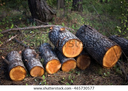 Firewood stacked out in the forest.