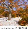 First snow in the forest in the mountains - stock photo