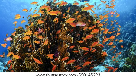 Fish and Coral in the Red Sea, Egypt