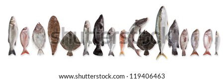 Fish in stock