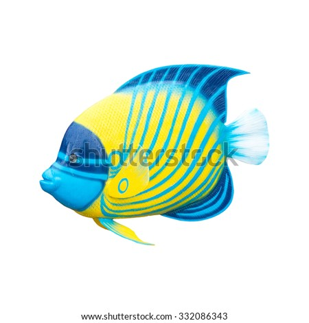 fish isolated on white background