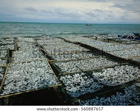 fish market in Makassar, South Sulawesi, Indonesia, Asia