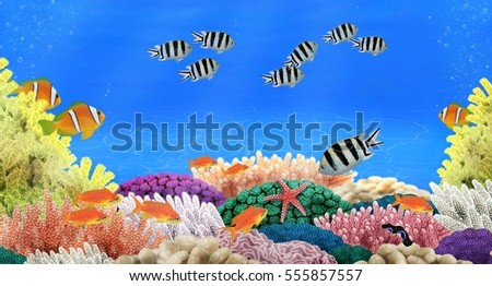 Fishes indigenous to the Red Sea at a colorful coral reef illustrated by Steven Russell Smith.