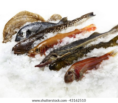 fishes on ice