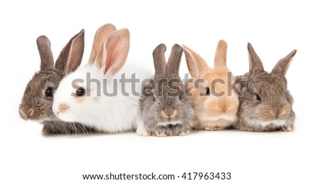 five little cute rabbit on a white.