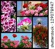 Five mosaic photos of geranium - stock photo