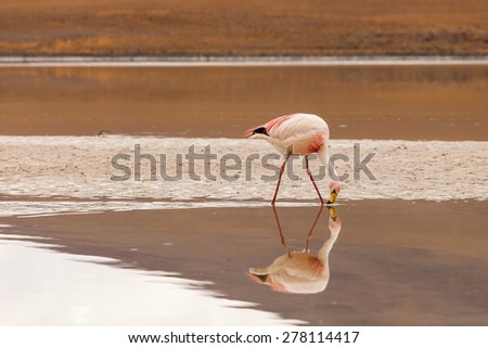 wild bird flamingo kenya africa nakuru stock photo