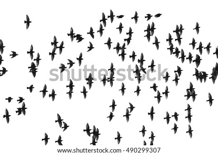 Stock Vector Illustrated Silhouettes Of Various Types Of Planes on jet landing