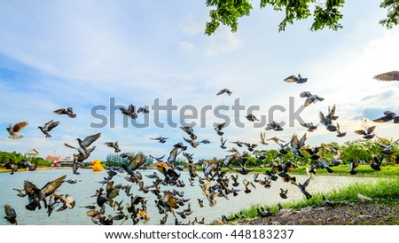 Flock start pigeons flying at park in town