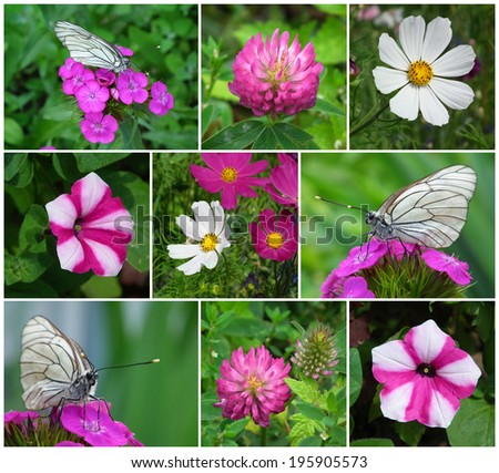Floral collage. Flowers and butterflies.