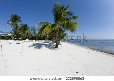 Florida palm tree on the beach and a blue sky