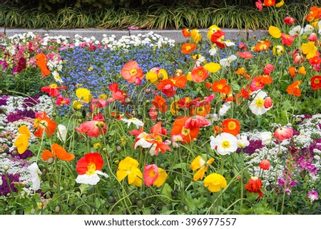 flowers background closeup texture of little colorful flowers on ...
