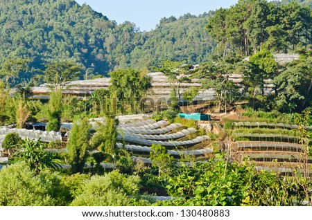 Flower farm on Doi Inthanon mountain in Chiang Mai, Thailand.