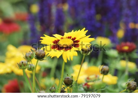 Flower garden with various blossoms