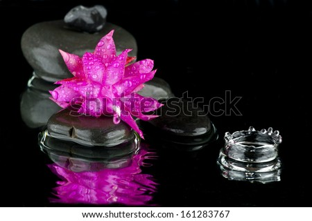 flower in water with stone on a black background