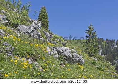 Flowering mountain meadow in summer at Brauneck