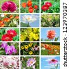 Flowers and garden collage - stock photo