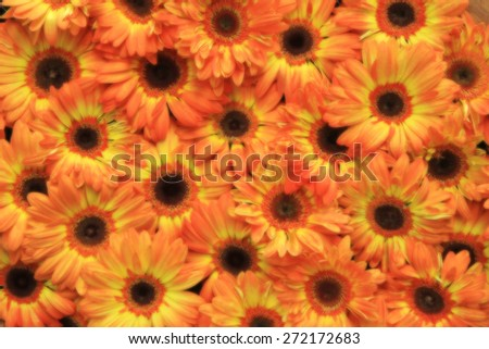 flowers background with blurred