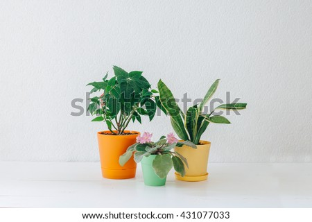 Lots succulent plants indoors stock photo 257987276 Colorful pots for indoor plants
