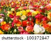 flowers in fied against blue sky - stock photo