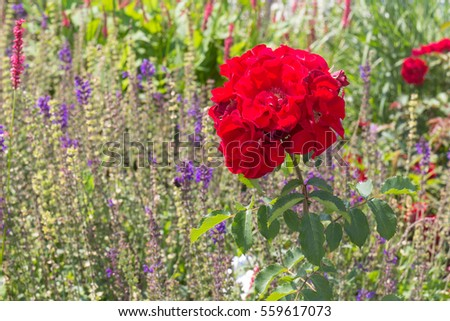flowers in summer on a sunny day with blue sky behind