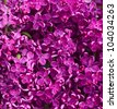 flowers Lilac background - stock photo
