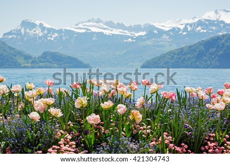 Flowers shown on the background of the Alps by the Lake Lucerne in Weggis