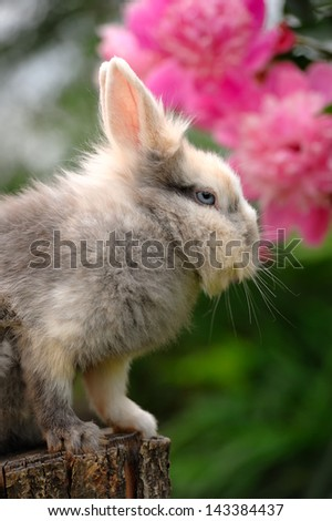 Fluffy Rabbit on Tree Stump