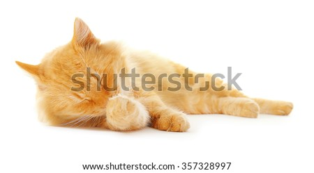 Fluffy red cat cleans itself isolated on white background