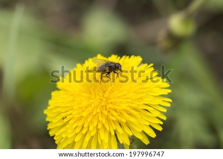Images rustypatched bumble bees