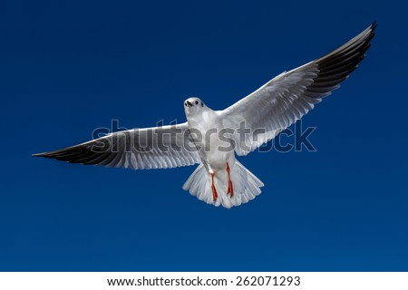 flying seagulls in sunlight on blue sky background