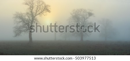 Fog at dawn in the forest panorama