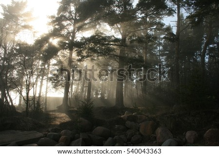 Foggy embankment of of the gulf of Finland, Russia