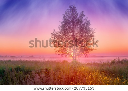Foggy summer landscape with tree in sunrise