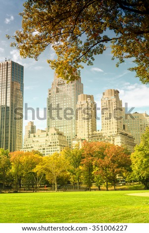 Foliage in Central Park, New York City.