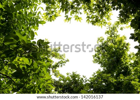 Foliage isolated on white