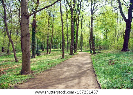 Footpath Forest / nature