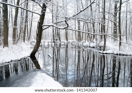 foresr river in winter