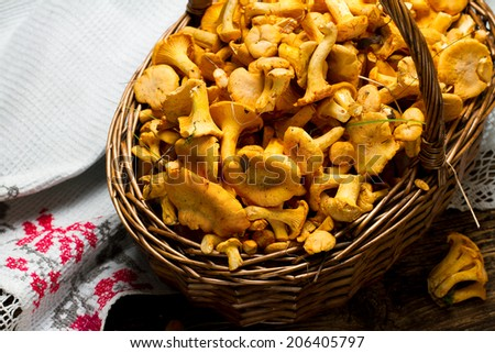 Forest chanterelles in willow basket with vintage Russian towel