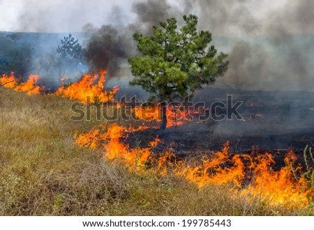 Forest fires and wind dry completely destroy the forest and steppe during a severe drought in southern Ukraine. The disaster brings regular damage to nature and the region's economy.