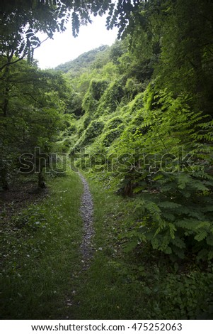 Forest. Green mountain forest landscape. Misty mountain forest. Fantastic forest landscape