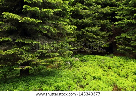 Forest landscape in National Park Retezat, Romania, Europe